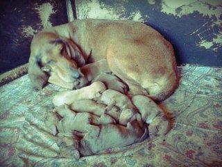 assistenza cani