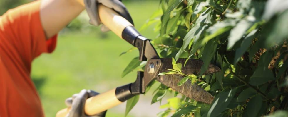 Servizio potatura piante