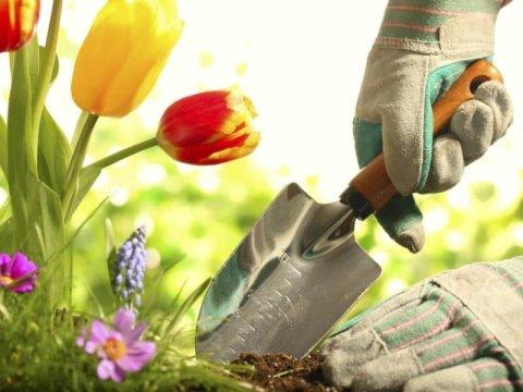 servizi di giardinaggio privati e pubblici