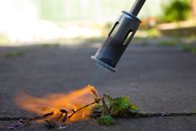 Weed Removal | Driveway Cleaning | Paver Cleaning | Driveway Cleaning Adelaide | Paver Cleaning Adelaide | Driveway Cleaning Melbourne | Paver Cleaning Melbourne | Paving Cleaning | Concrete Cleaning