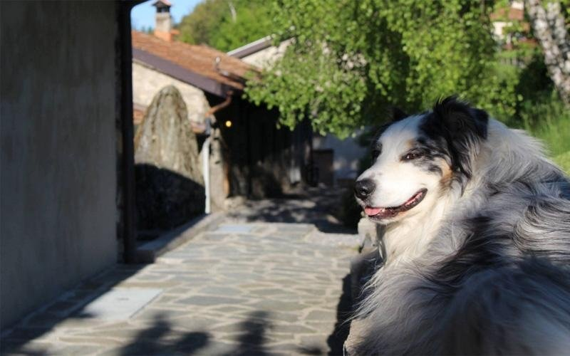 Gli amici animali Agriturismo La Nevera
