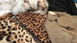 giacca Cavalli, abbigliamento casual, negozio alta moda