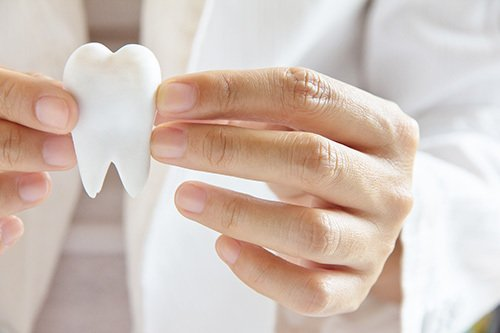 Dentist holding plastic tooth