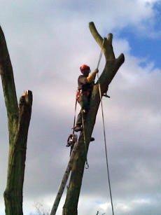 tree felling using rope