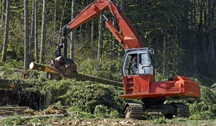 tree work being carried out
