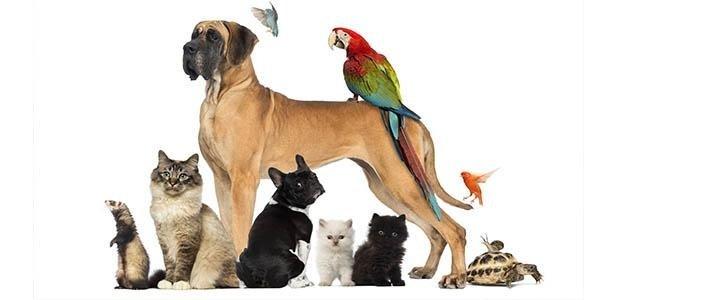 cibo animali