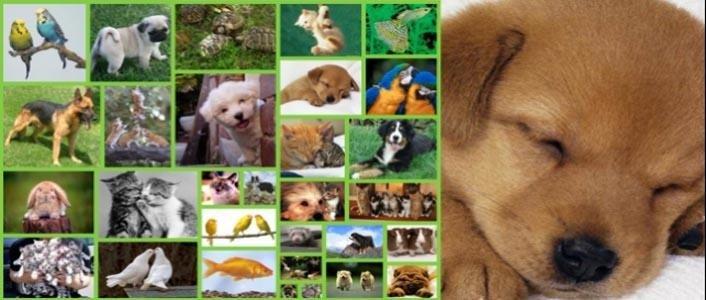 ingrosso per animali