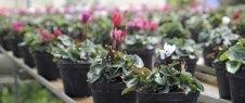 piante esotiche, piante alto fusto, fiori