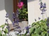 consolidamento scarpate, disinfestazione di giardini, irrigazione automatica