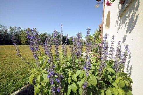 manutenzione periodica di giardini, progettazione di giardini pensili