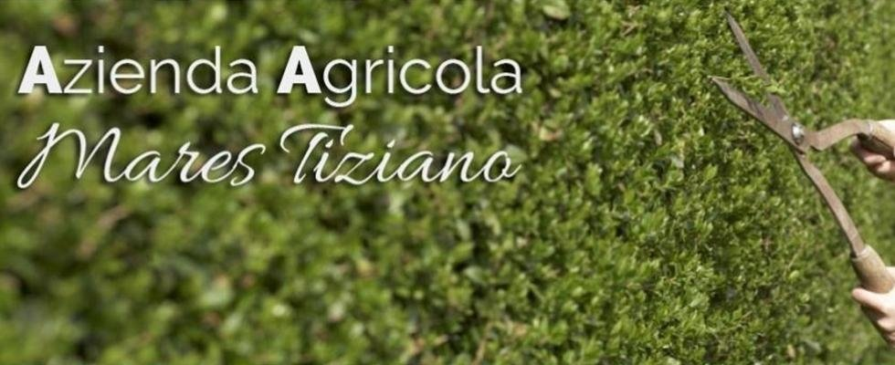 AZIENDA AGRICOLA MARES