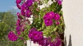 servizi di giardinaggio, allestimento aree verdi, consolidamento scarpate