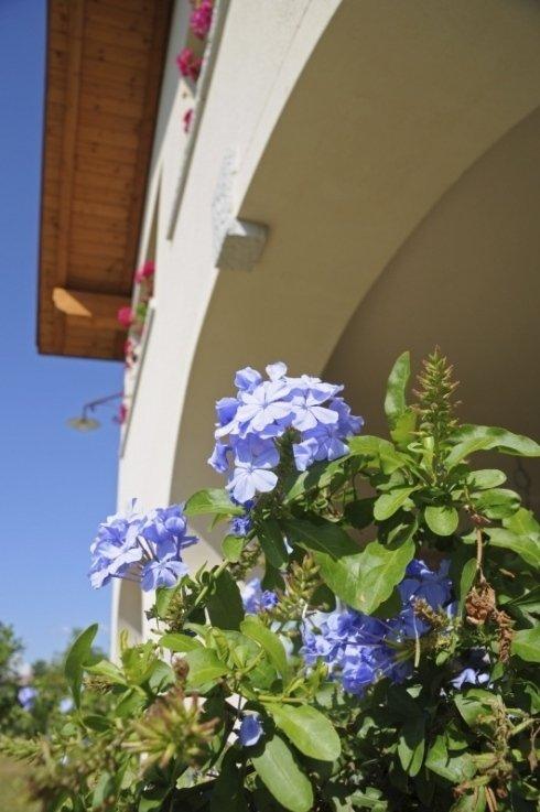 servizi di giardinaggio, allestimento aree verdi
