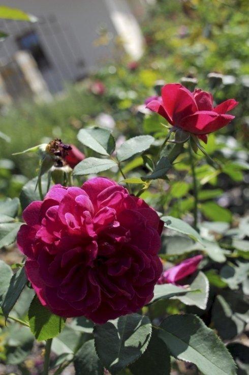 florovivaismo, piante da esterno, progettazione giardini