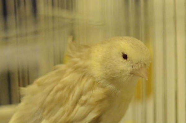 Uccello con occhi tristi