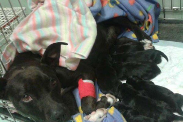 Cane con la gamba rotta