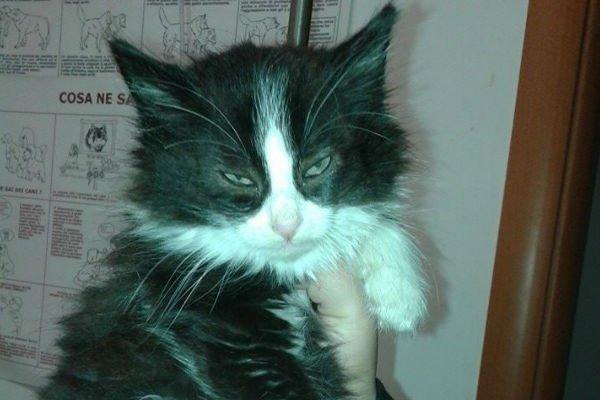 Gatto con occhi tristi