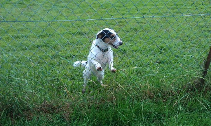 dog kennels in colchester blackbrook kennels cattery amp dog grooming