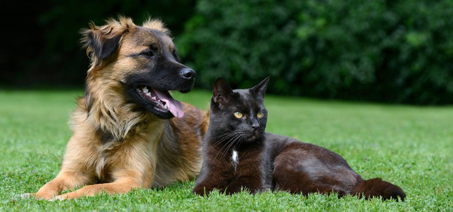 A dog and cat relaxing on the grass