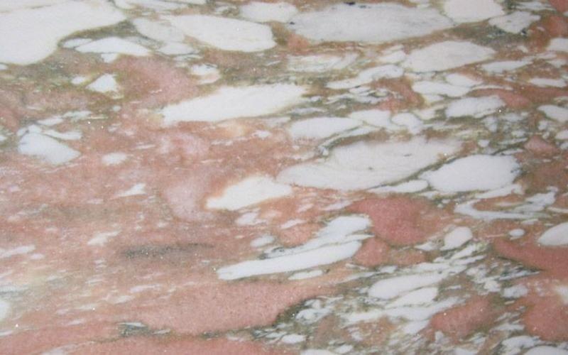 Rosa Norvegia