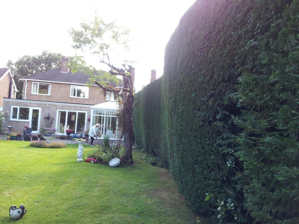 beautifully shaped garden