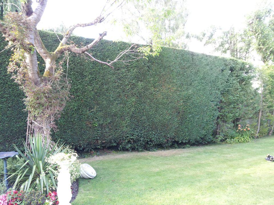garden area after maintenance