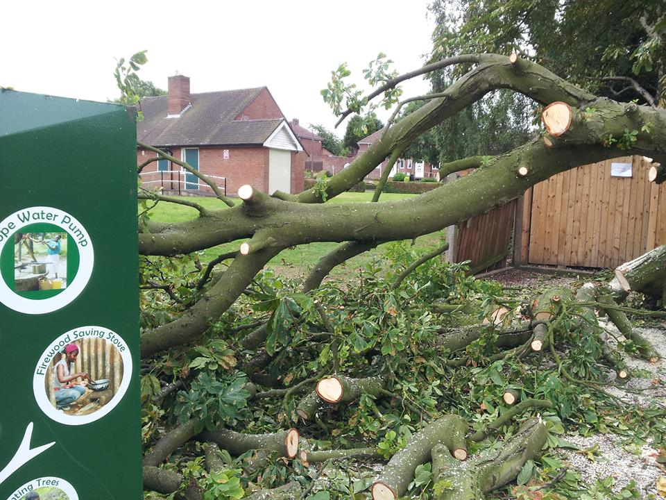 tree branch felling