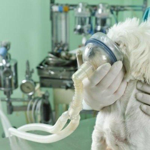 Intervento chirurgico con respiratore