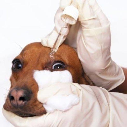 Cure oculistiche per cani