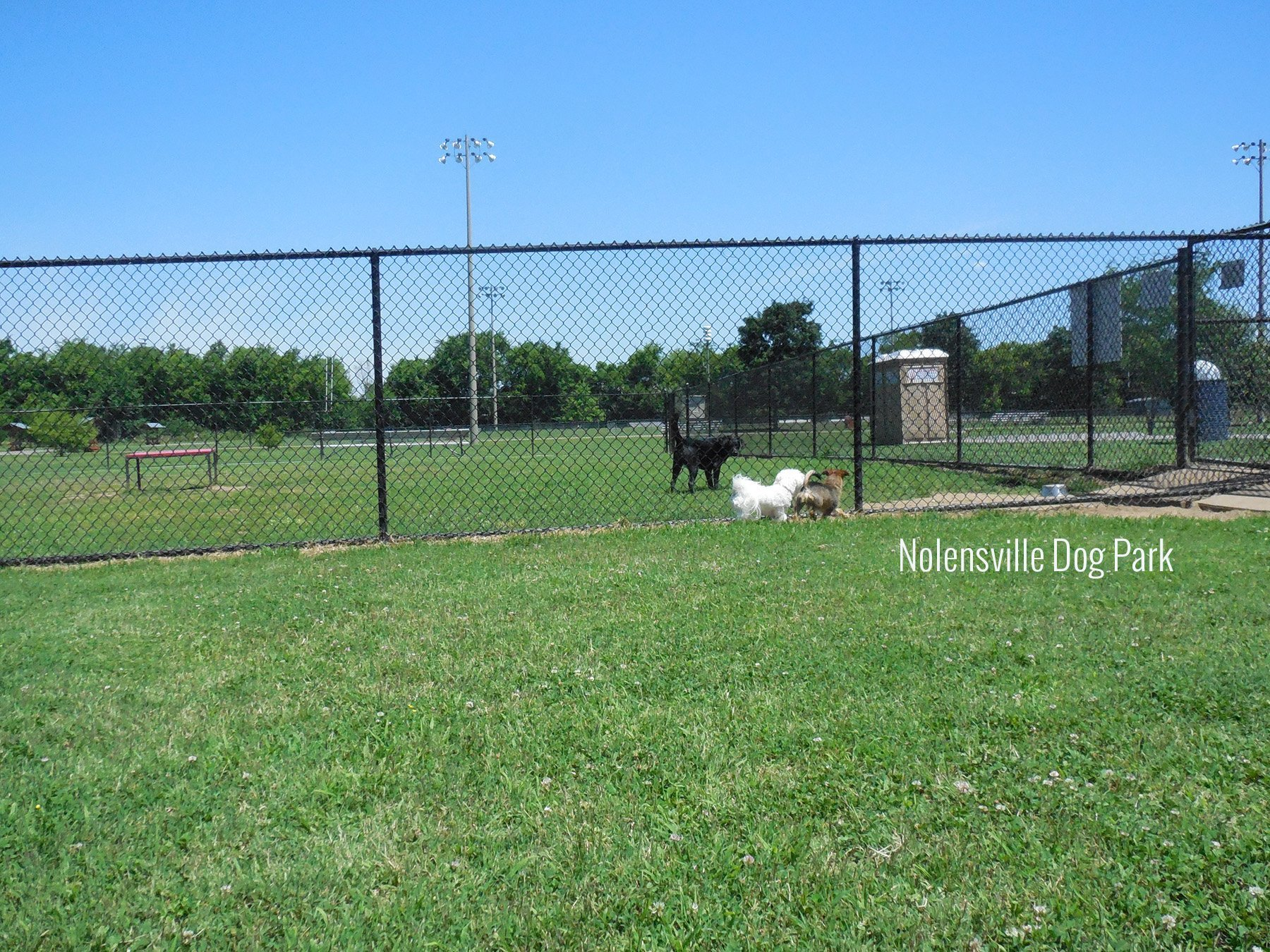 Dog Park Brentwood Tennessee