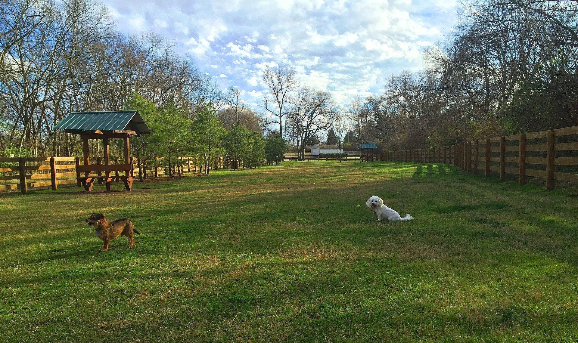 Centennial Park Off Leash Dog Area