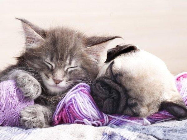 visite mediche veterinarie
