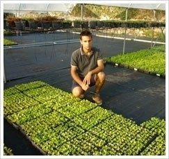 piante da orto biologiche