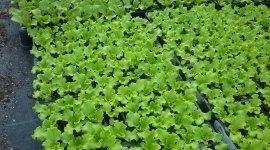 piante bio
