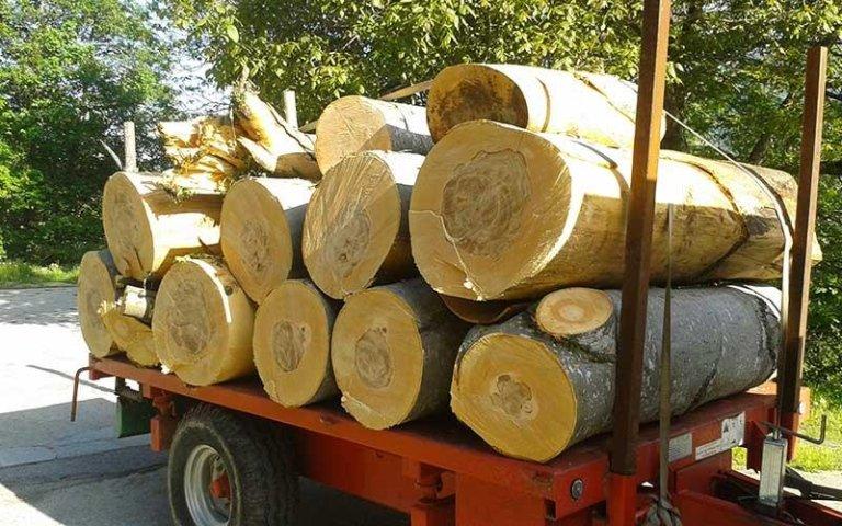 trasporto di legna