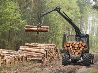 pulizia boschi
