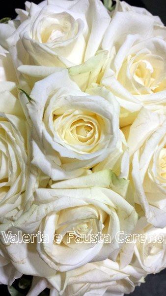 primo piano di rose bianche