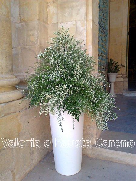 grande vaso con pianta