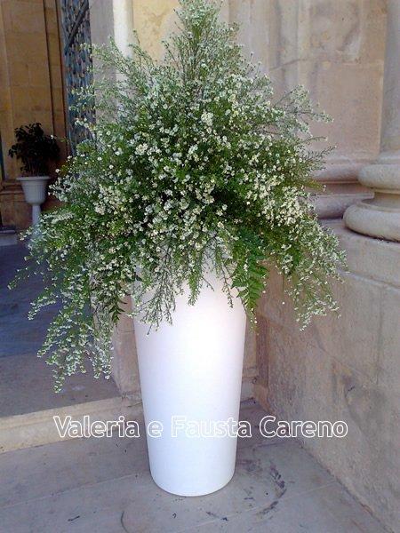 pianta con vaso da esterno