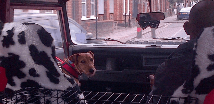 A dog riding in the front passenger seat of a Landrover