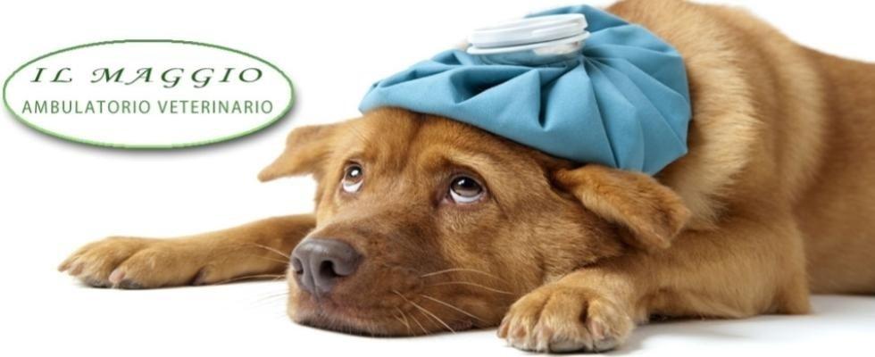 ambulatorio veterinario il maggio