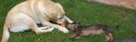 Assistenza veterinaria per cani e gatti