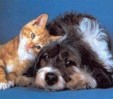 cani, gatti, visite specialistiche per animali