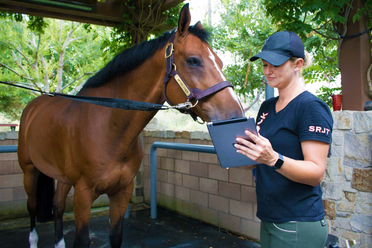 electronic vet helping horse