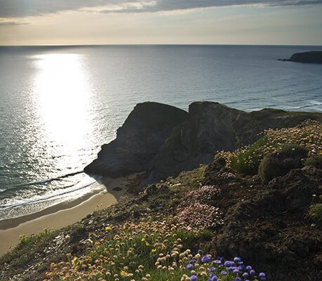 flowers near the shore