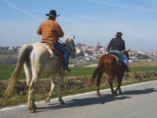 passeggiate equitazione