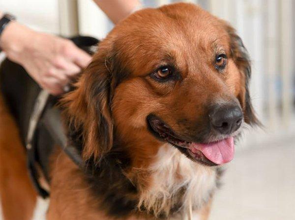 cane in assistenza al pronto soccorso veterinario campano a San Prisco in Campania