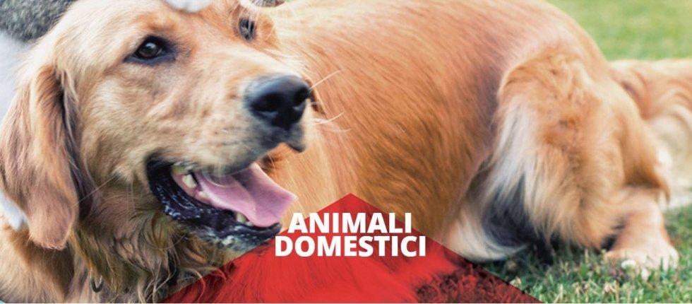 polizza animali domestici