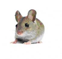 academic pest control mice