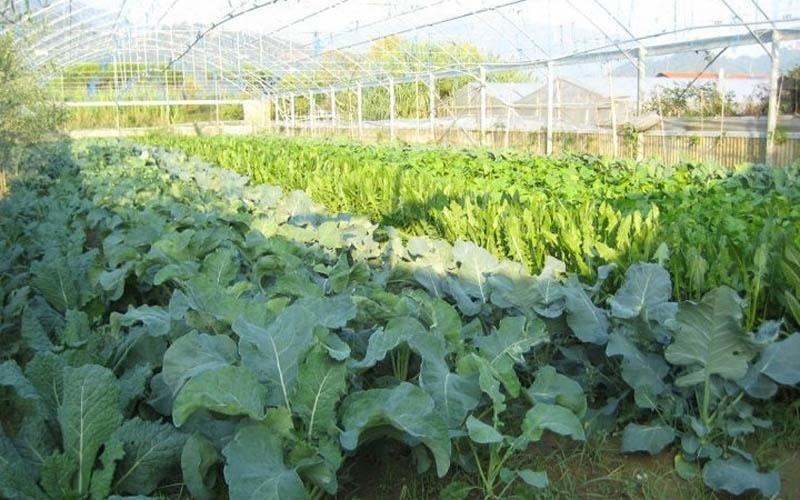 Verdura dell'orto